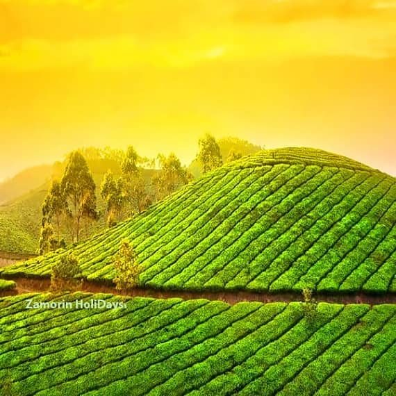 Kerala_munnar_tour_packages