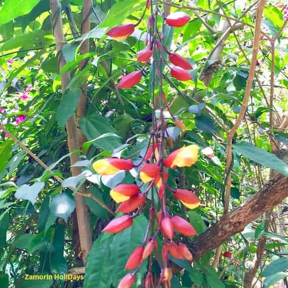 periyar spice garden