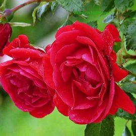 blossom-hydel-park-munnar