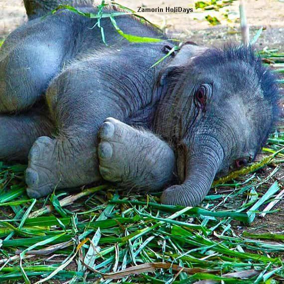 Kodanand Elephant Sanctuary